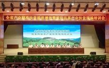 <b>陕西省紫阳县:茶叶专家来授课 助力茶产业提质增效</b>