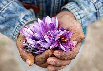 <b>青海玉树:藏族青年小伙索南求培依靠藏红花圆了创业梦</b>