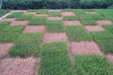 十年间中国农业新种撒遍大湄公河次区域