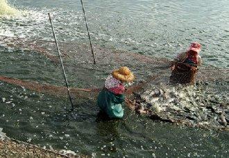 <b>内蒙古:青年赵凯接手父亲鱼塘发展水产养殖 打造地方特色水产品牌</b>