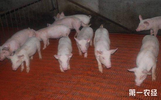 瓦楞纸手工动物猪步骤