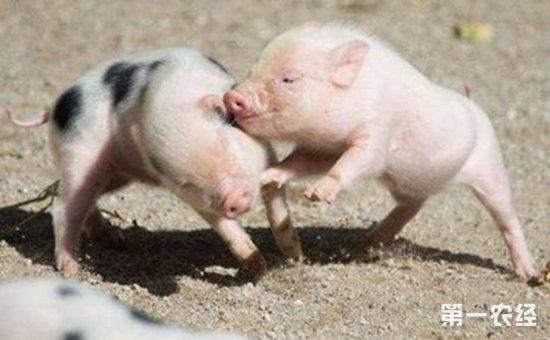 猪呼吸道疾病种类繁多,那么,接下来和小编来一起来看看猪呼吸道疾病有图片
