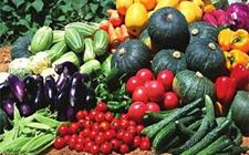 贵州:种植绿色优质农产品 增收致富暖民心