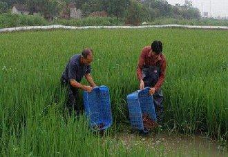 <b>江苏盱眙:稻虾丰收,贫困的生活有了转机</b>