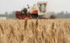 河南:2018年夏粮总产量达722.74亿斤!
