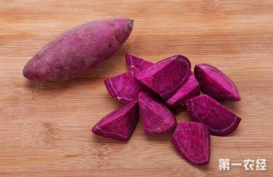 红薯一斤多少钱?紫薯为什么比红薯贵?
