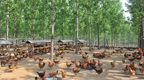 农村养殖需要交税吗?2018年农村养殖的税收介绍