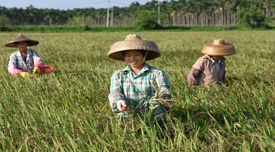 近期国家又出台农民补贴政策了!门槛低,几乎家家都能领!