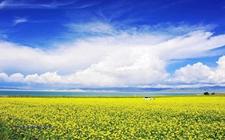 青海省:开发高原特色农业 推进当地农业可持续发展