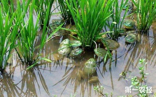 牛蛙种苗100000_牛蛙种苗5000000多少钱呀_牛蛙种苗一千万只多少钱呀