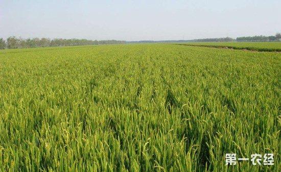 氮肥是世界上生产量跟使用量最多的肥料,通过提供植物氮素营养从而提高农作物的产量以及改善农产品的质量。固氮基因能把大气中的氮吸收后转化成为化合态氮并固定在植物根部中,但只存在在一些豆科植物中。科学家们也一直在致力研究固氮基因技术,如果能在如果能把这项技术实现在农作物上将对农业发展起到关键性的作用,日前固氮基因研究技术已经取得了一项重大突破,下面我们就来了解一下详细的相关信息。    美国圣路易斯华盛顿大学日前发布新闻公报说,该校研究人员通过移植固氮基因,成功使一种光合作用细菌获得了从空气中吸收氮的能力。这将有助于研究植物固氮技术,培育不需要施氮肥的农作物。   圣路易斯华盛顿大学的研究人员在美国《微生物学》网络杂志上发表论文说,他们移植的固氮基因来自一种蓝杆藻。蓝杆藻是一类特殊的蓝细菌,有着昼夜节律,白天通过光合作用储存能量,夜间利用这些能量进行固氮,合成叶绿素。   这是科研人员首次培育出既会光合作用又有固氮能力的转基因生物,为相关研究提供了许多新线索,包括实现固氮至少需要多少基因、什么基因能减少氧气对固氮过程的干扰、如何减少固氮的能耗等等。   新闻公报说,这项新成果意味着,人们也许很快就能让农作物自行合成氮肥,节约农业生产成本,并减少化肥工业造成的污染。     为了保证农作物的产量,在农业生产过程中都会使用大量的氮肥,固氮基因技术的研究是可持续农业发展的关键,能解决环境、粮食、能源所面临的问题,可以在提高农作物产量的同时减少化肥的使用节约生产成本,也能改善化肥工业对环境造成的污染。