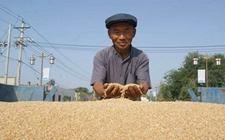 安徽:加快推行多项措施 促进农民夏粮收购