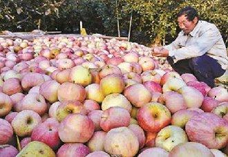 水果滞销事件频繁出现 导致其滞销是何原因