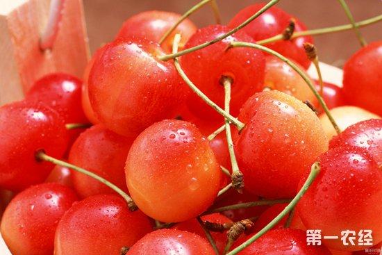 2018年上半年广东口岸樱桃进口价格同比飙升1.7倍