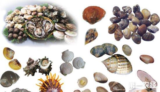 山东威海:水产品供销旺季 海参继续升温贝类价格亲民