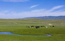 <b>新疆:生态保护和畜牧增收两不误</b>