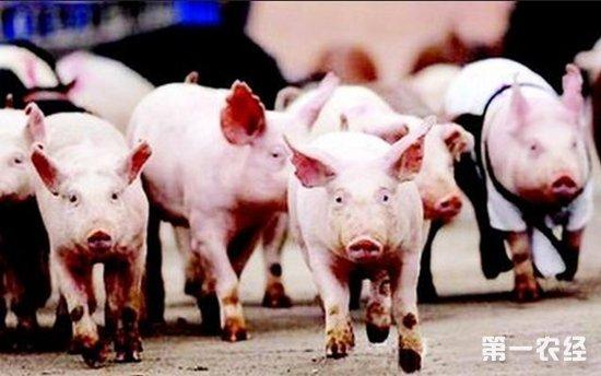 猪价上涨行情不是很稳定 专家建议养猪户逢高出售