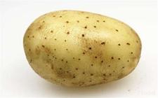 国家薯类作物研究中心举行揭牌仪式