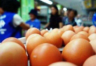 <b>武汉:夏季蛋鸡产蛋率下降 引起鸡蛋蛋价持续走高状态</b>