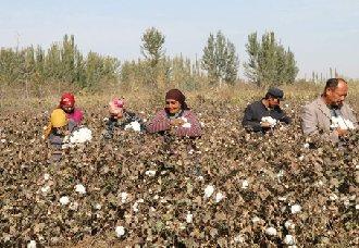 新疆:利用绿色防控技术管理棉花 减少农药对环境污染