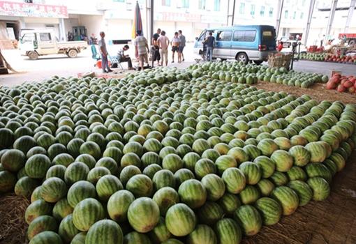 合肥市蜀山区:物业与社区联手助瓜农 滞销西瓜瞬间抢购一空