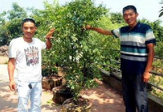四川普潮村:荒山变成致富园 兄弟齐心种植枣树实现致富