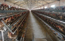 <b>泉州:整治养猪场中,上半年关闭生猪养殖场290家(户)</b>
