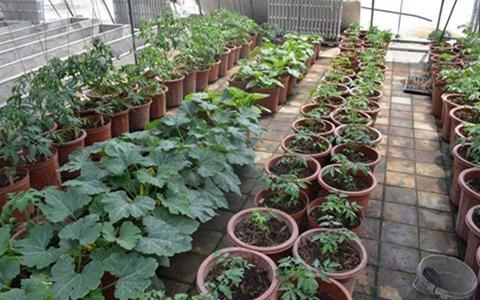 湖南:盆景蔬菜种植既保证菜品安全又让贫困户脱贫增收致富
