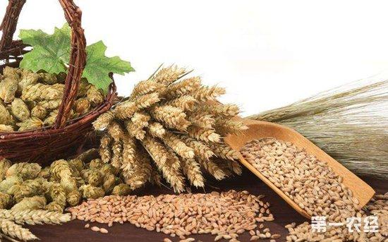 2018年8月8日水稻、小麦、大豆等粮食价格
