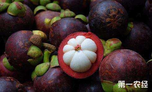 山西太原上周水果价格整体呈下降趋势