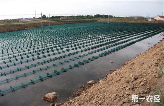海参要怎么养?五种海参的养殖模式