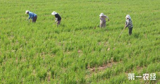 美国科学家团队在真菌基因组发掘出天然除草剂的新作用机理