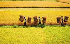 农业农村部:三大粮食作物将被纳入农业保险保费补贴目录
