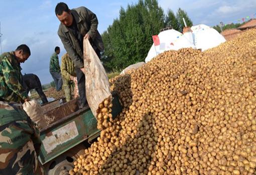 恩施市:2.5万公斤滞销土豆获教育局帮助已卖出