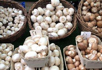 蘑菇多少钱一斤?2018年8月9日蘑菇市场价格行情