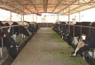 预防病害从养牛场的管理开始,牛场的管理要点