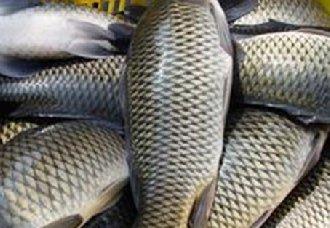 <b>夏天草鱼死亡率高?夏季高温草鱼的养殖技巧</b>