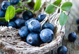 蓝莓有哪些常见的病害?要怎么防治?