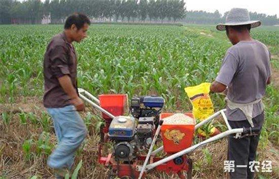 玉米要怎么施肥?玉米的四个施肥阶段