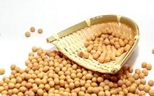 今后我国大豆进口将往多元化方向发展