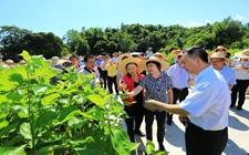 云南:以政策带动各种产业扶贫
