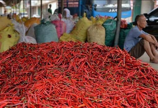 四川德阳:受暴雨影响 滞销辣椒总量达20多万斤