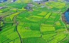 <b>黑龙江:调整种植结构 促进优质高效农业的发展</b>