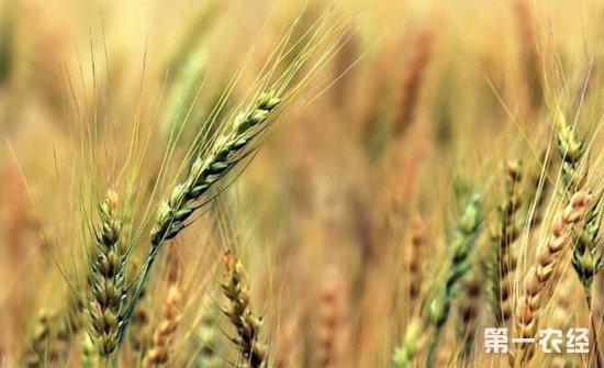 """有机肥料""""富活素"""":变废为宝,降低种植成本实现""""肥药两减"""""""
