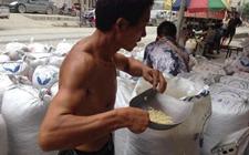 湖南龙山:百合成为当地经济发展的催化剂