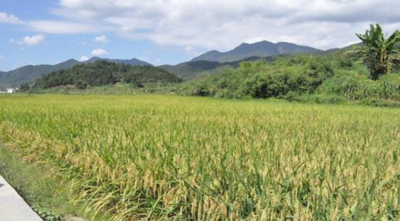 2018年农民种植水稻有补贴吗?一亩补贴多少钱?