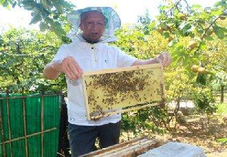 <b>四川泸州:七旬老人张安智成养蜂能手 年收入5万以上</b>
