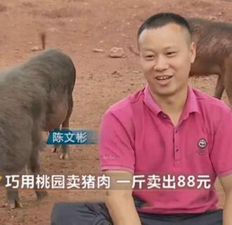 放弃百万年薪返乡养猪 将猪肉卖出88元一斤高价