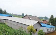 <b>紧挨住房建养猪场被勒令整改 居民不接受或将依法关停</b>