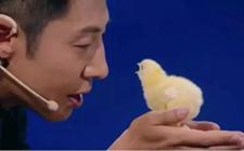 <b>《加油!向未来》:为期21天,中国首只无壳孵化小鸡出生了!</b>